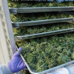 États-Unis : Altria dans le cannabis
