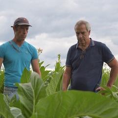 Traditab et tabaculture